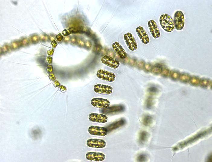 Tale of a Plankton Trip
