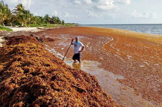 Scientists Discover the Biggest Seaweed Bloom in the World
